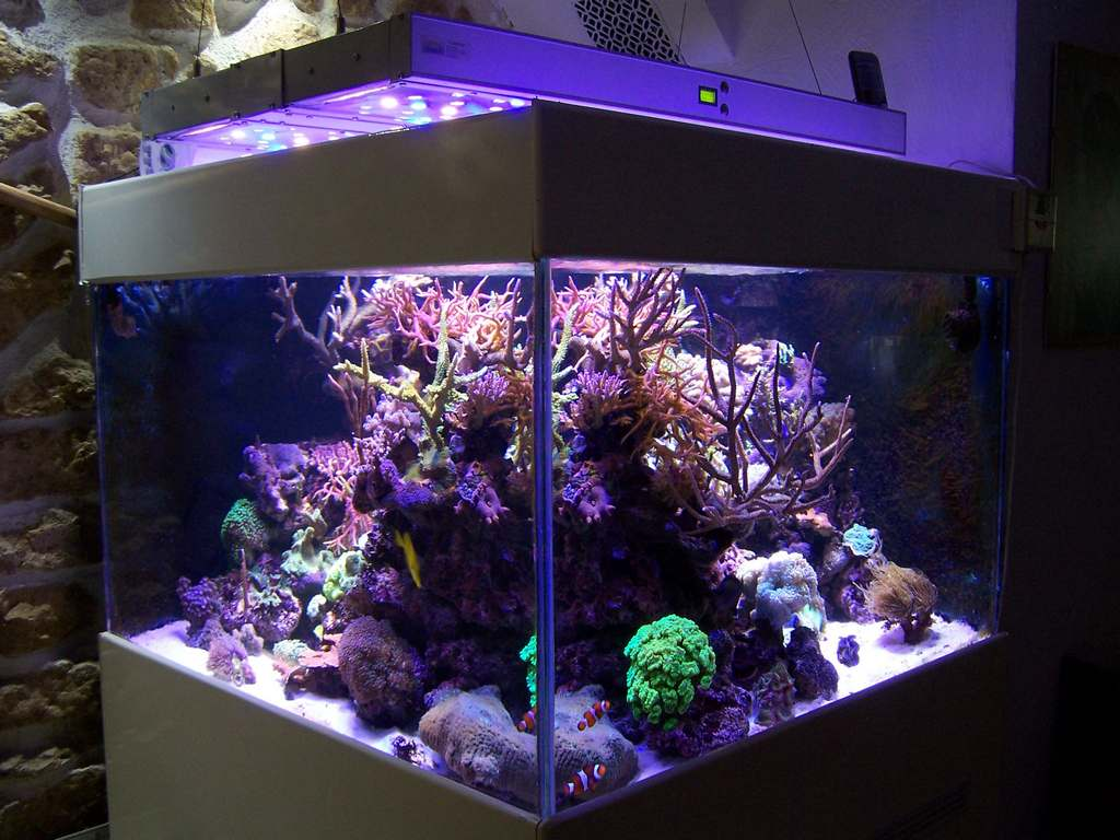 Commencer un aquarium d eau de mer 28 images le bac r for Aquarium bac