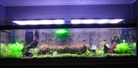 Rampe LED aquarium malawi