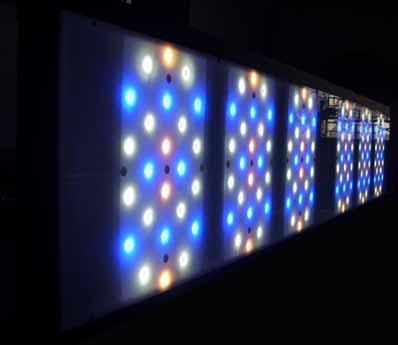aquarium eclairage LED SPS LPS