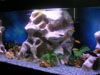 Rampe LED aquarium planté